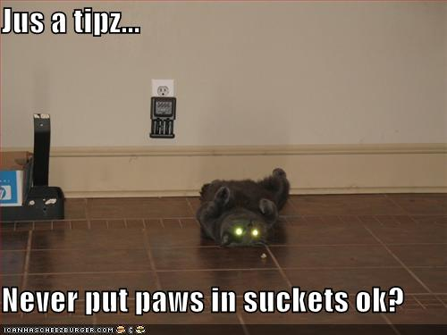 """""""Never put paws in sockets"""""""