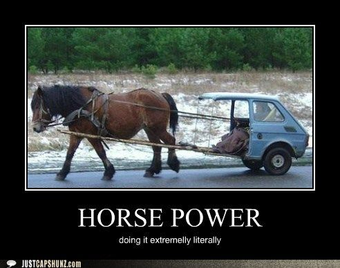 funny horse pictures with captions – Google Search