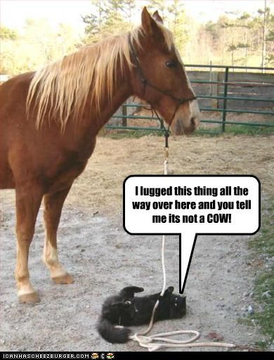 """Funny Horse Pictures With Captions #2 search Pinterest""""> #2"""