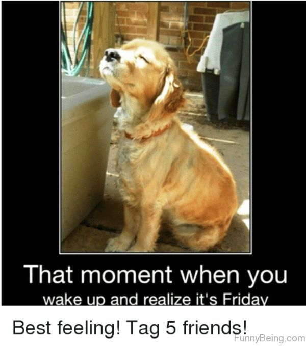 That Moment When You Wake Up Friday Meme