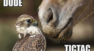 Funny Horse Pictures with Captions   30 Funny animal captions – part 17 (30…