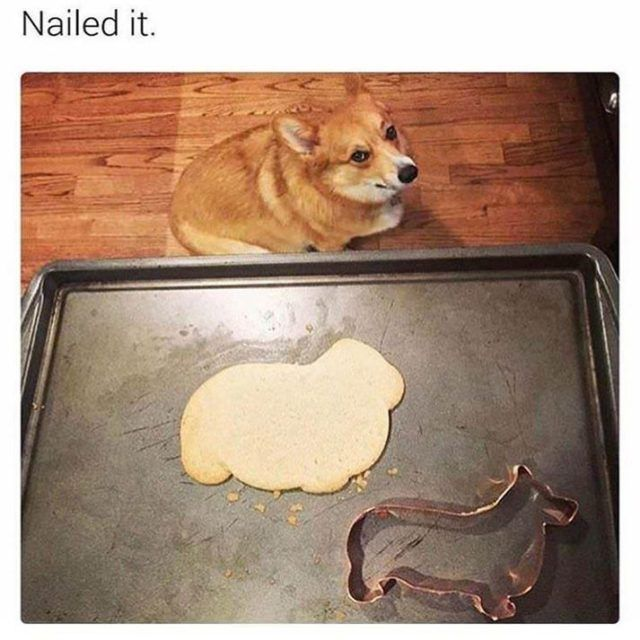 40 Funny Dog Pictures With Captions – Funnyfoto | Funny Pictures – Videos -…