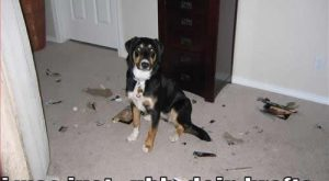 dog+funny+pictures+with+captions   Funny dogs with captions Funny Dogs -Funny dog pictures...