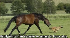 funny dog pics with captions | Fnny dog pictures with words,Funny Dogs Pics, Dog…