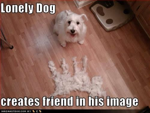 funny pet pictures with captions   Funny dogs with captions Funny Dogs -Funny dog…