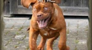 funny pet pictures with captions   Funny dog running hyped on coffee Funny dog…