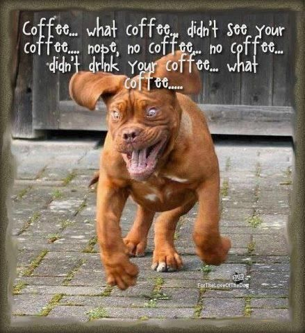 funny pet pictures with captions | Funny dog running hyped on coffee Funny dog…