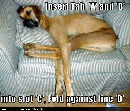 funny dog pics with captions | Asad's blog: funny dogs with captions