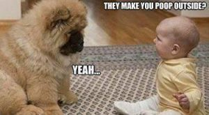 funny dog pictures with captions | Baby to puppy they make you poop outside…