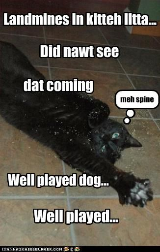 funny dog pictures with words | Funny dog pictures with words | Funny Dog…
