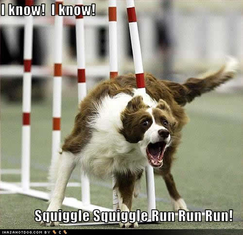 funny+dog+pictures+with+captions | Funny dog photo with caption agility weave poles