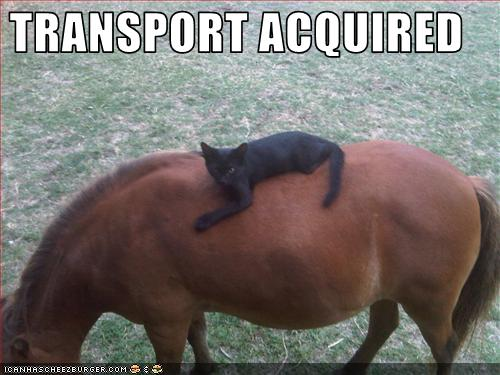 Amazing and Funny Horse Pics | really funny pictures