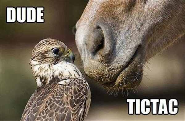 Funny Horse Pictures with Captions | 30 Funny animal captions – part 17 (30…