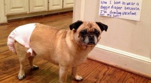 Okay, fine this was a lose-lose for everyone.   23 Photos That Prove Pug…