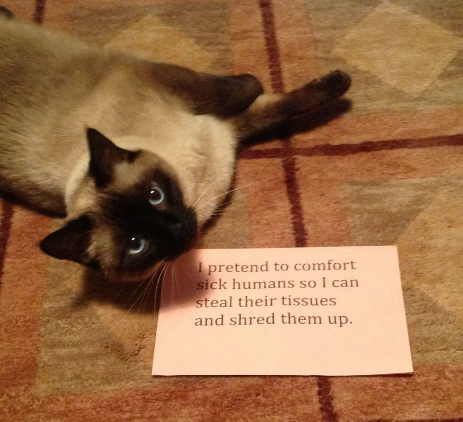 Cat shame. I actually am a cat lover, and it is my experience that…