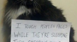 "Cat shaming. #funnydogshaming explore Pinterest""> #funnydogshaming"