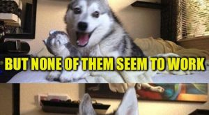 Bad Pun Dog | I HAVE A FEW JOKES ABOUT UNEMPLOYED PEOPLE BUT NONE…