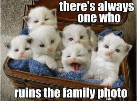 Theres Always One Who Ruins The Photo funny memes animals cats jokes story meme…