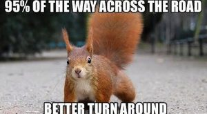 funny squirrels, funny squirrel photos, squirrel memes –