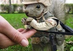 Marine squirrel // funny pictures – funny photos – funny images – funny ...