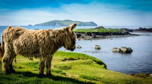 The scottish highland cow's donkey cousin … Today is #fun explore Pinterest&#8...