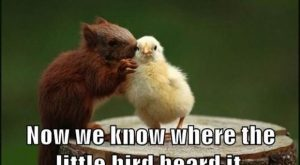 Dump A Day Beware Of Animals With Funny Captions – 40 Pics