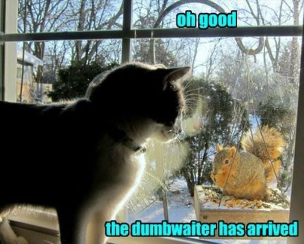 DUMBWAITER HAS ARRIVED! Dump A Day Beware Of Animals With Funny Captions – 28…