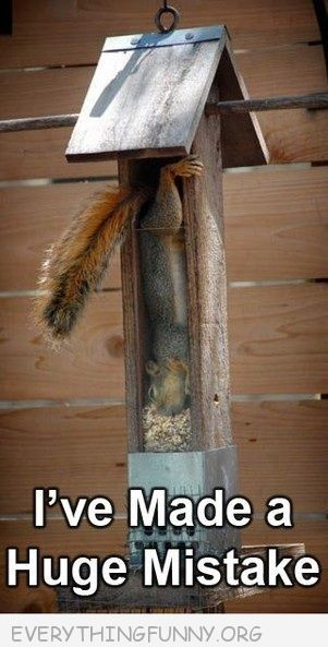 funny caption picture squirrel caught in feeder i've made a huge mistake