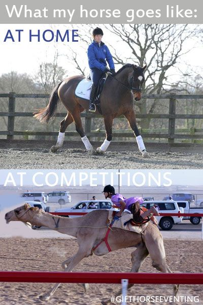 Surely everyone has experienced 'racing camel' at some point in their lives, a...