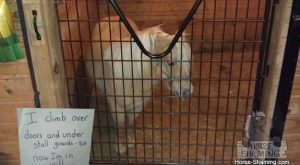 Horse shaming: 11 Horses who are very ashamed of what they did (but not…