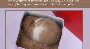 Hamster Training – Provide a Digging Opportunity for Your Hamster