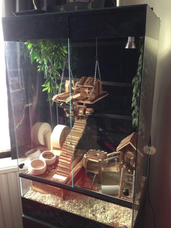 Love this hamster/mouse-gerbil set up and im currently collecting all these toys for my…...