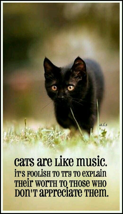 Cats are like music it's foolish to try to explain their worth to those…