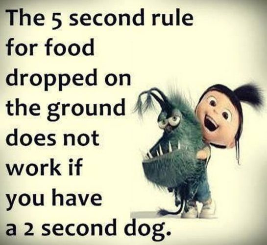 Hilarious Minions quotes of the hour (06:44:30 PM, Sunday 28, February 2016 PST)