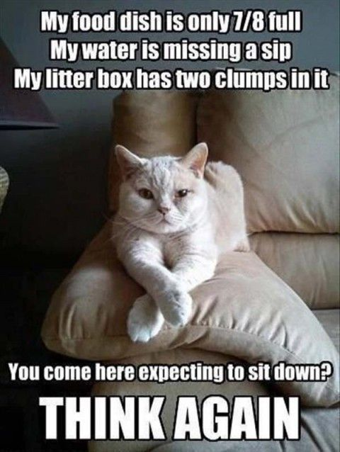 """Top 30 Funny Animal Pictures and Jokes #images explore Pinterest""""> #images with c..."""