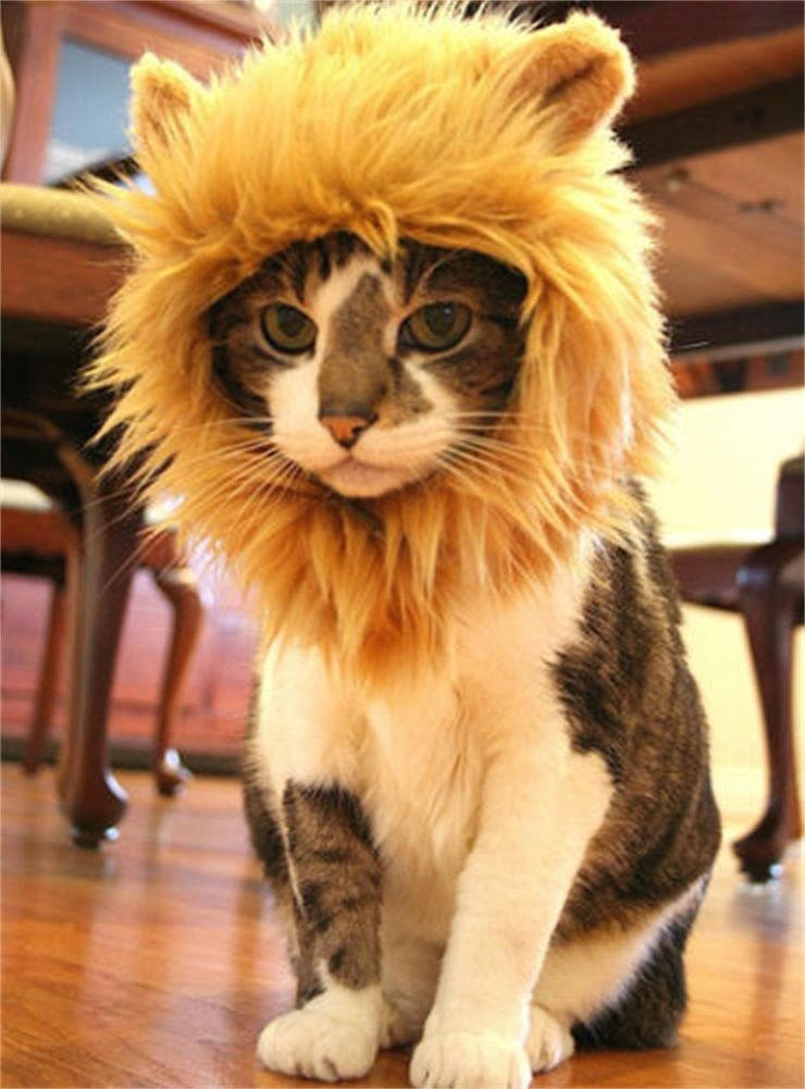 £ GBP – Cat Dog Lion Mane Wig Costume Hat Pet Clothes For Halloween…