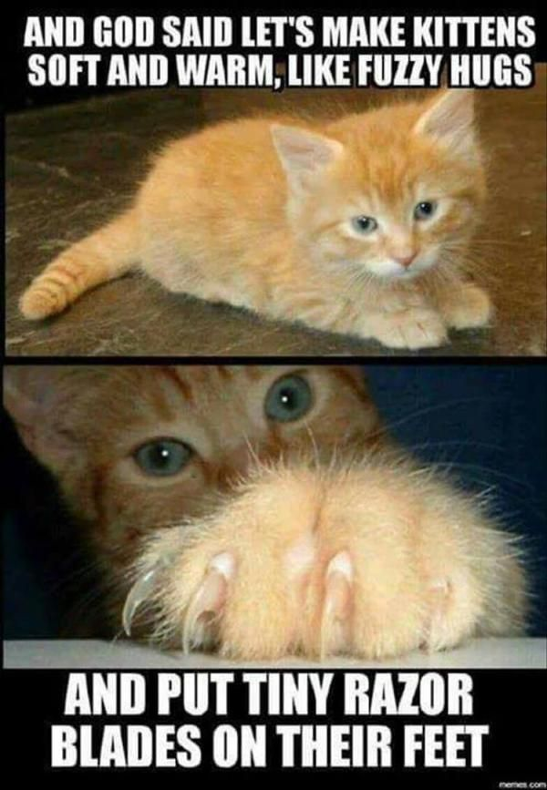 """18 Funny Animal Pictures Of The Day #funny explore Pinterest""""> #funny #picture ex..."""