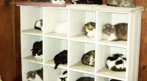 new from Ikea Crazy Cat Lady organizer Good