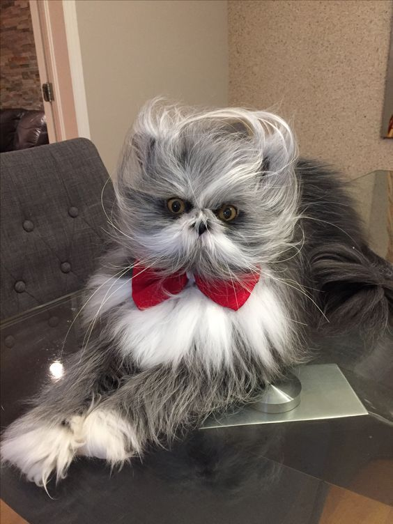 Atchoum may look like something out of the Jim Henson Workshop, but he's no…