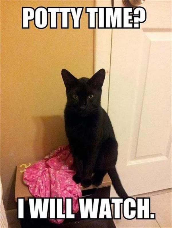 "25 Funny Animal Pictures Of The Day #funny explore Pinterest""> #funny #picture ex..."