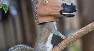 Hilarious horse head squirrel feeder