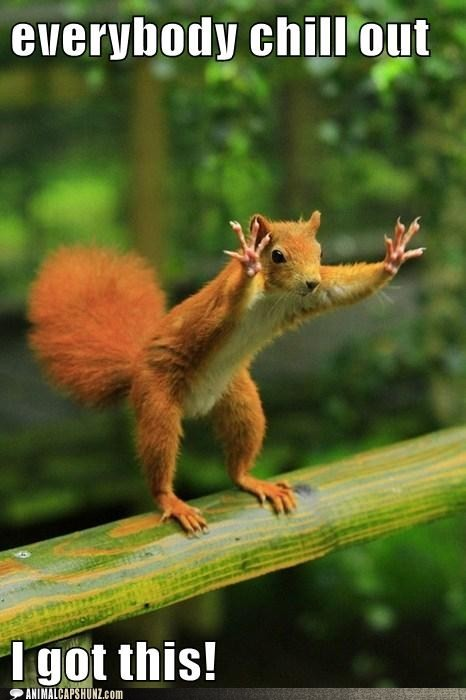 Funny Animal Captions – Just Calm Down
