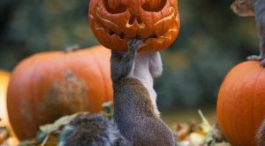 PetsLady's Pick: Hilarious Squirrel Jack O'Lantern Of The Day … see