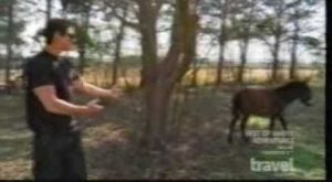 ghost adventures – hilarious donkey scene (+playlist) Can you imagine a donkey comin...
