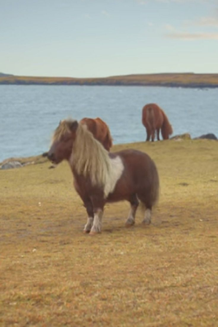 As Soon As The Farmer Leaves, The Pony Starts Dancing! Hilarious! #dance explore Pinterest...
