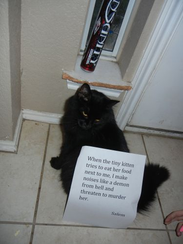 Cat Shaming | Left my knit hat and hipster glasses at home…good thing I've…