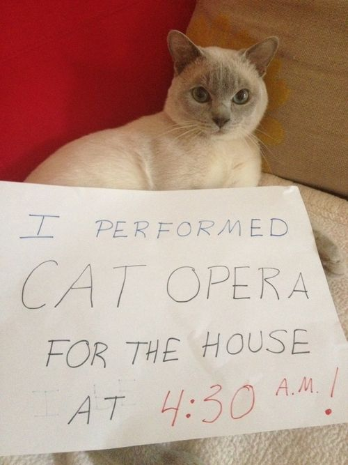 """""""I performed cat opera for the house at 4:30 AM."""" My cat Angel does…"""
