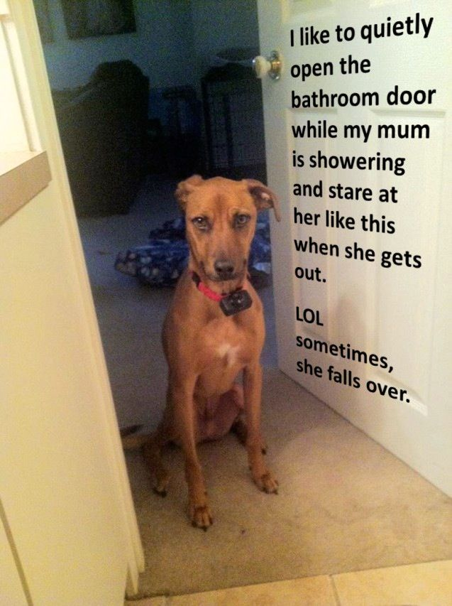 The Best Dog Shaming Pictures Of All Time
