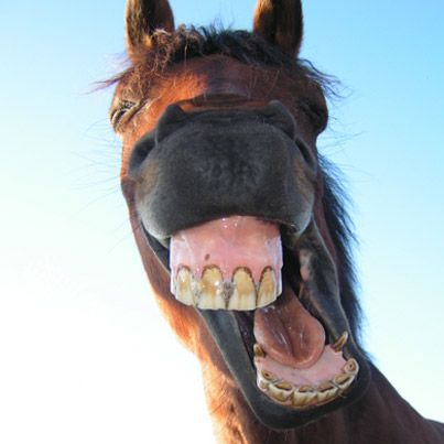 """Animal : Funny Horse Pictures With Captions #43 search Pinterest""""> #43 picture &#821..."""