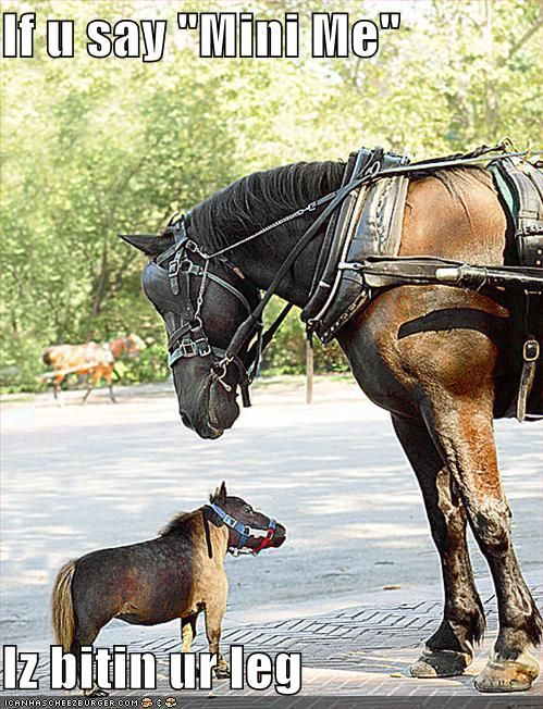 Funny Horse   See Top 20 Funny Horse Humor Pictures in worlds
